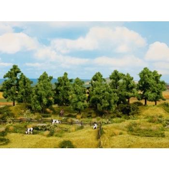Lehtpuud 16tk 10-14cm