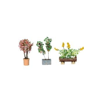 Ornamental Plants in Tubs 1