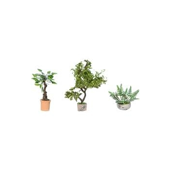 Ornamental Plants in Tubs 3