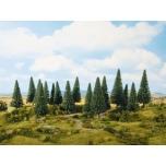 Kuusepuud 16tk 10-14cm