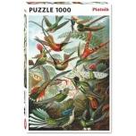 PUSLE Humming birds 1000TK PIATNIK