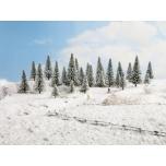 Lumisedkuused 10tk. 5-14cm.