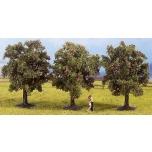 Puud õunapuud 8cm