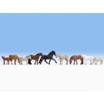 Hobused 9tk.