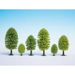 Lehtpuud 5tk 5 - 9 cm