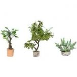 Ornamental Plants in Tubs 3