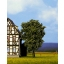 Roheline pirnipuu 11,5cm